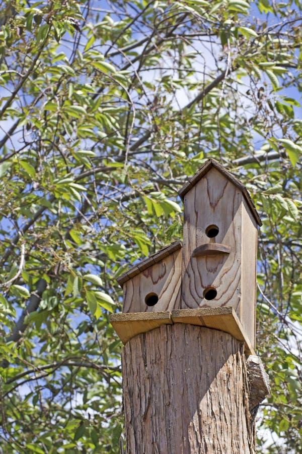 Trefaldigt träfågelhus i träd arkivfoto