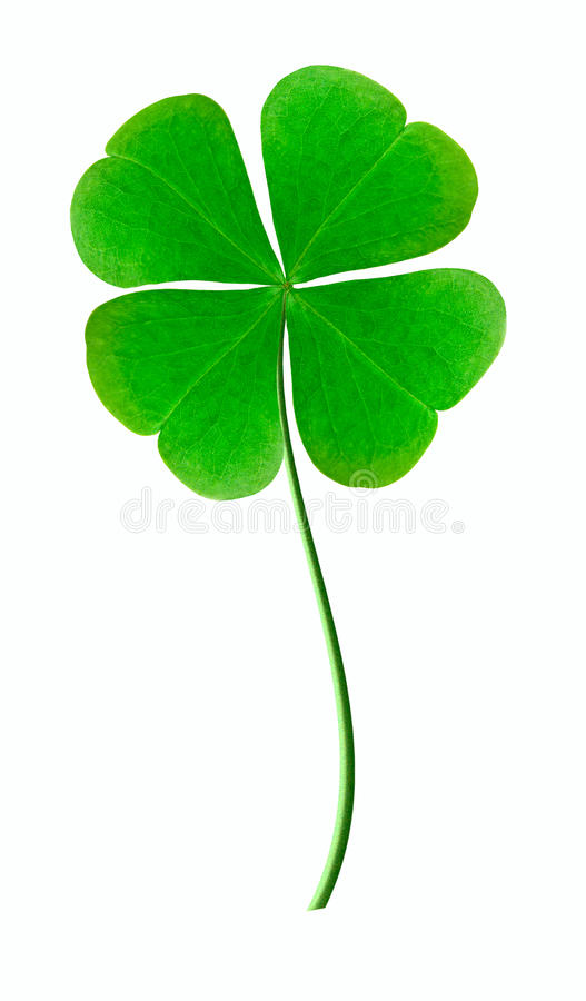 Trefoil. Is Good luck symbol royalty free stock photography