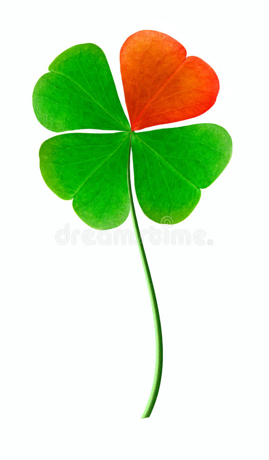 Trefoil. Is Good luck symbol royalty free stock photo