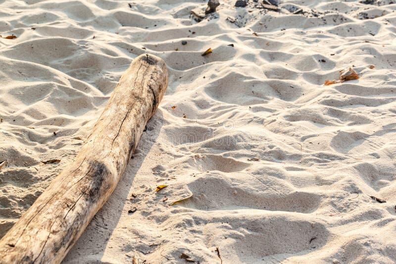 Treibholz auf dem Sand lizenzfreies stockfoto