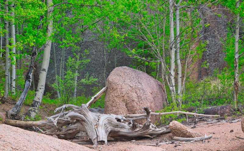 Treibholz auf dem Ufer stockfotos