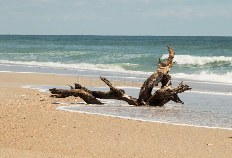 Treibholz auf dem Ufer lizenzfreie stockfotos