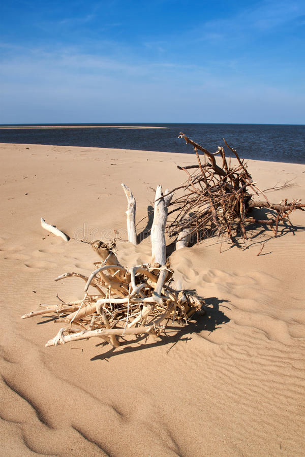 Treibholz auf einem Strand lizenzfreie stockfotos