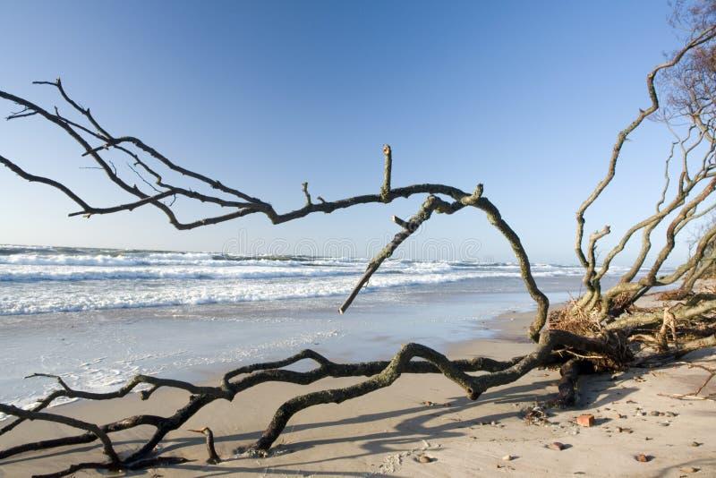 Treibholz auf Strand stockbild