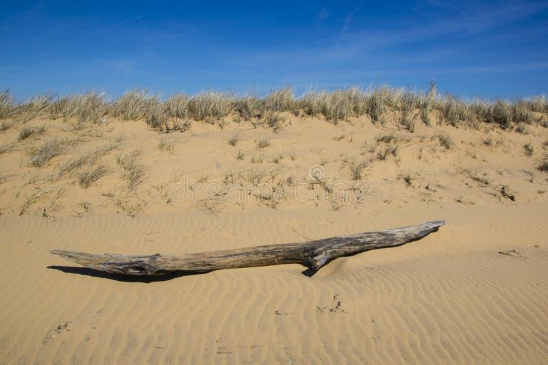Treibholz auf Wind-durchgebrannter Sanddüne lizenzfreie stockfotografie