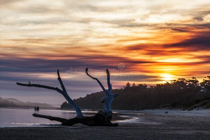 Treibholz bei Sonnenuntergang, Victoria, Australien stockfotos