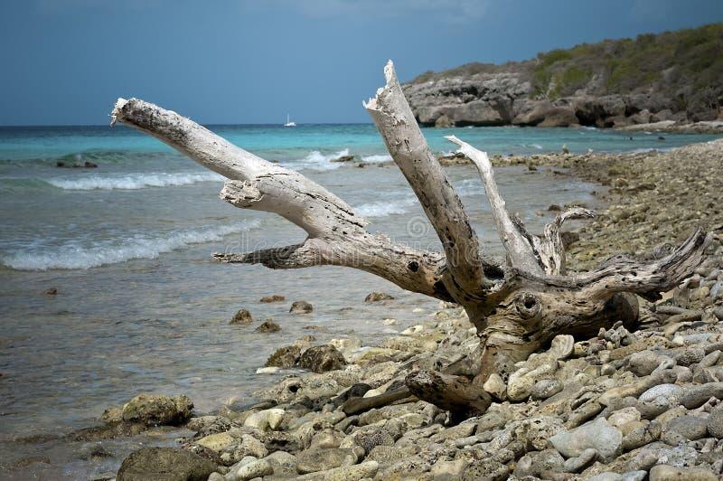 Treibholz im karibischen Strand lizenzfreie stockbilder