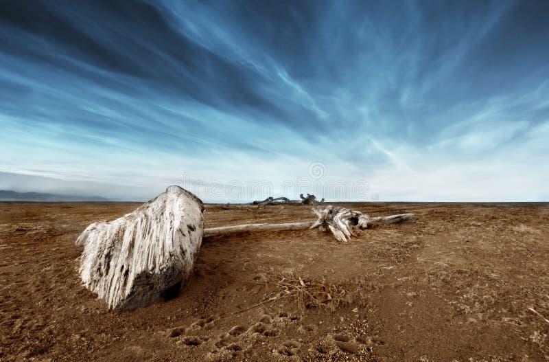 Treibholz im Sand lizenzfreie stockfotos