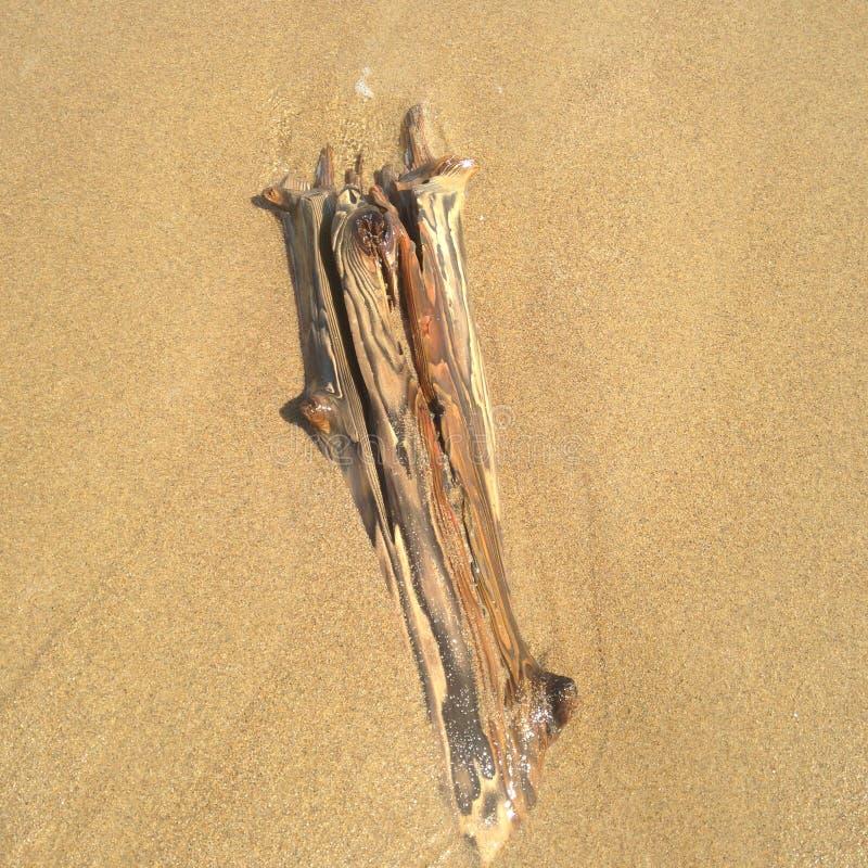 Treibholz im Wasser und im Sand stockfotografie