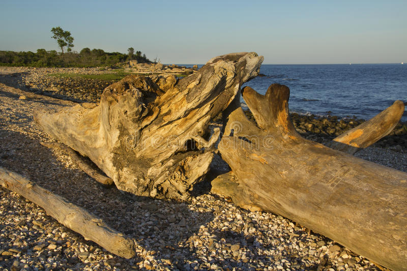 Treibholz meldet Kiesstrand, Hammonasset-Nationalpark, Madison an, lizenzfreie stockfotos