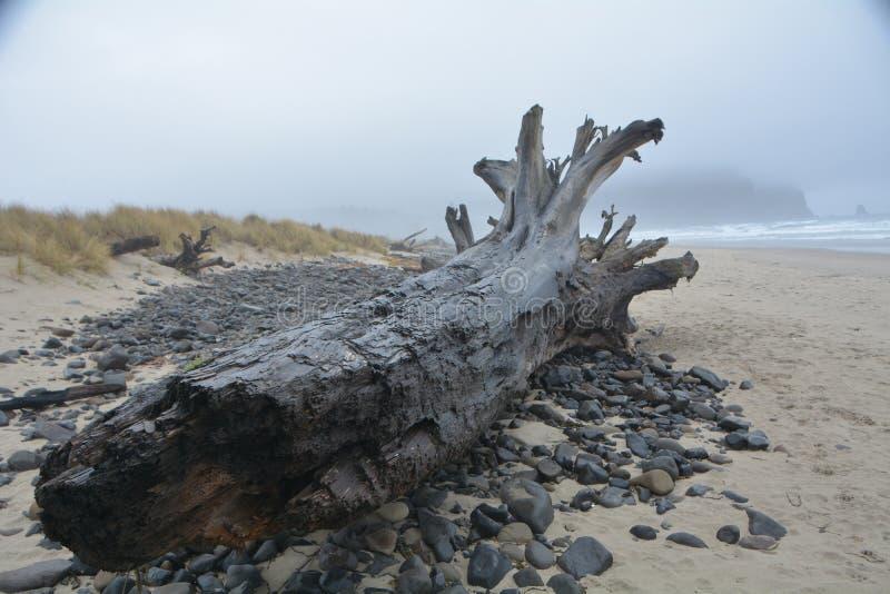 Treibholz und Felsen in Cape Meares an der Oregon-Küste stockbilder