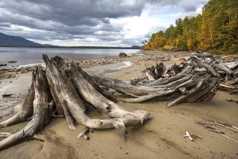 Treibholz und Herbstlaub auf der Küstenlinie von Flagstaff See lizenzfreies stockfoto