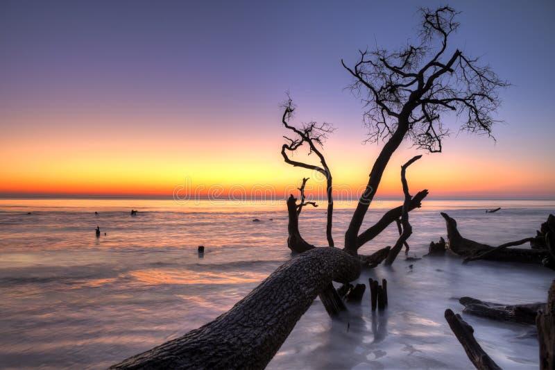 Treibholz und Sonnenaufgang hdr lizenzfreie stockbilder