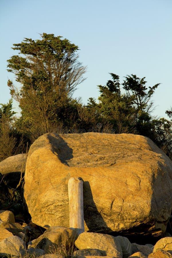 Treibholzklotz, der auf Glazial- Flussstein, Hammonasset-Strand, Betrug sich lehnt lizenzfreie stockfotos