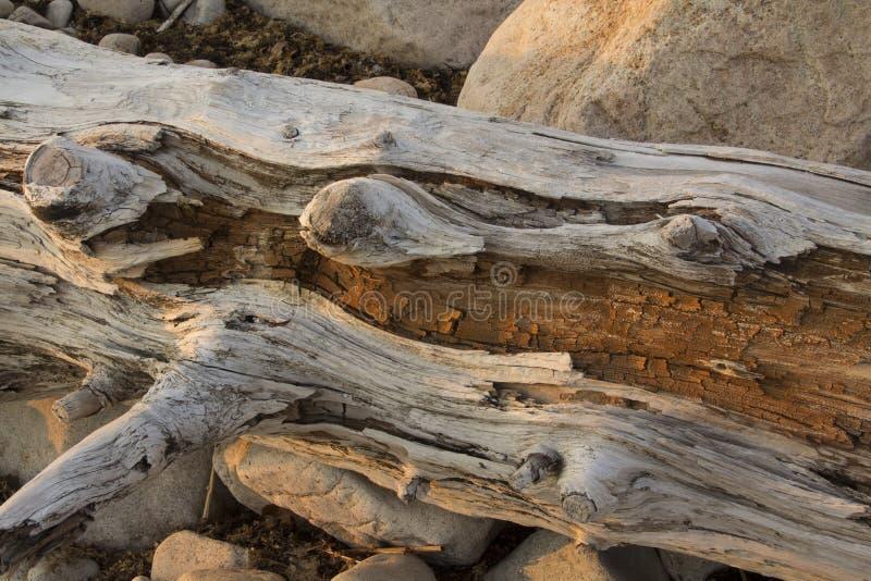 Treibholzklotz und -flusssteine bei Sonnenuntergang auf dem Strand in Connecticut stockbild