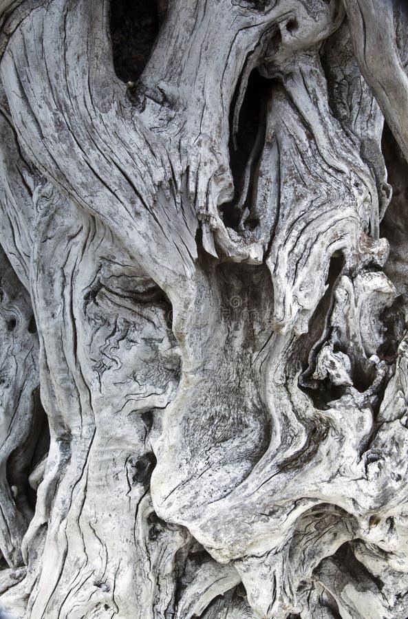 Treibholzkorn- und -knotenbeschaffenheit lizenzfreies stockbild