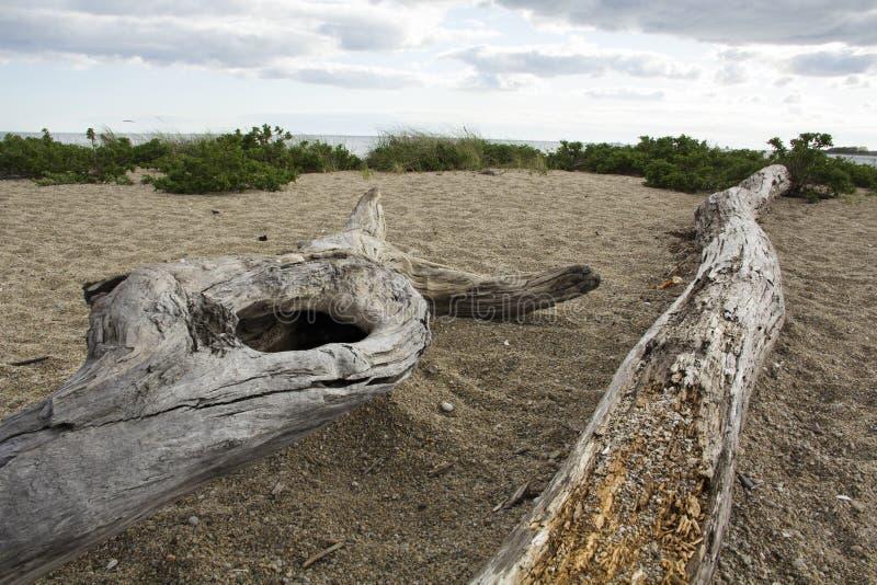 Treibholzlogon ein Strand in dem Ozean in Connecticut stockfoto