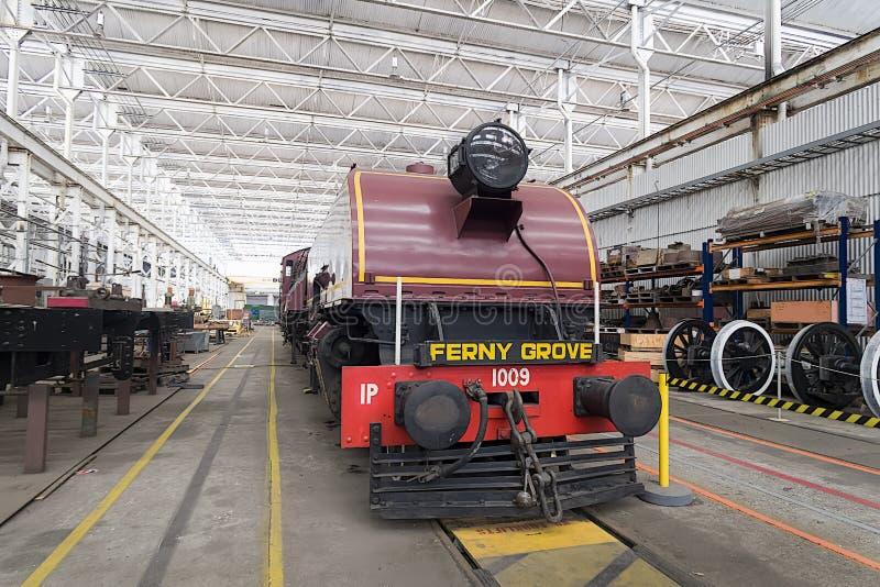 Trein aan Ferny Bosje stock fotografie