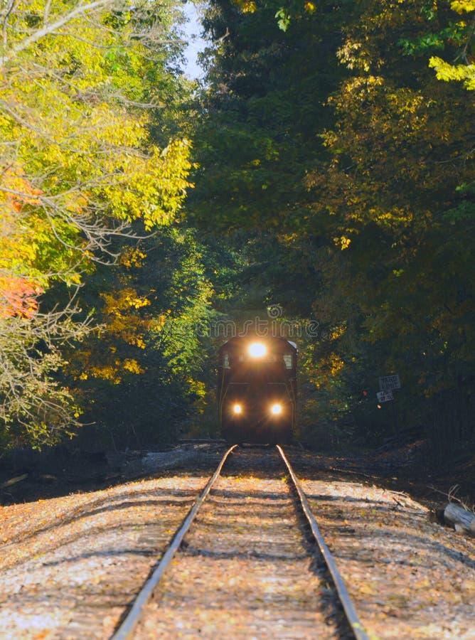Trein in hout stock fotografie