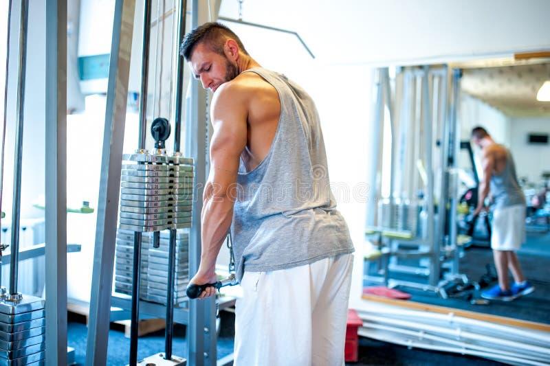 Treinador atlético da aptidão, treinamento do halterofilista no gym, tríceps imagens de stock royalty free