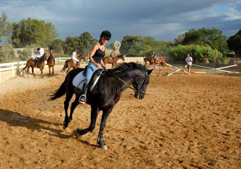 Treinamento da competição do cavalo fotografia de stock royalty free