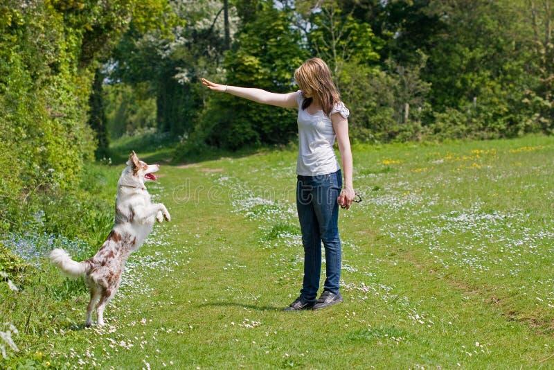 Treinamento da menina seu cão foto de stock
