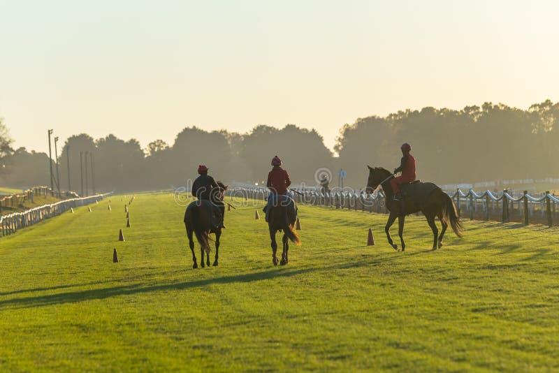 Treinamento da trilha dos cavaleiros dos cavalos foto de stock royalty free