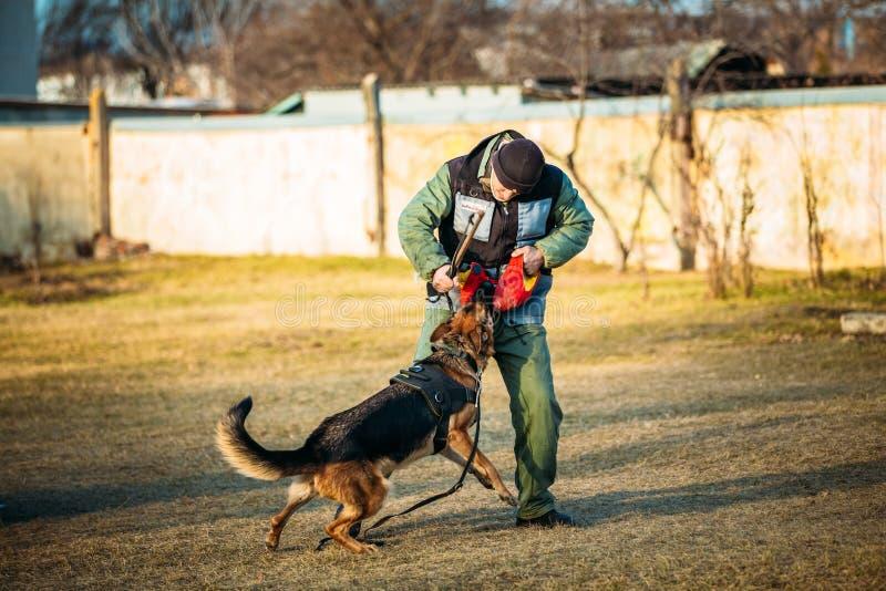 Treinamento de Dog do pastor alemão foto de stock royalty free