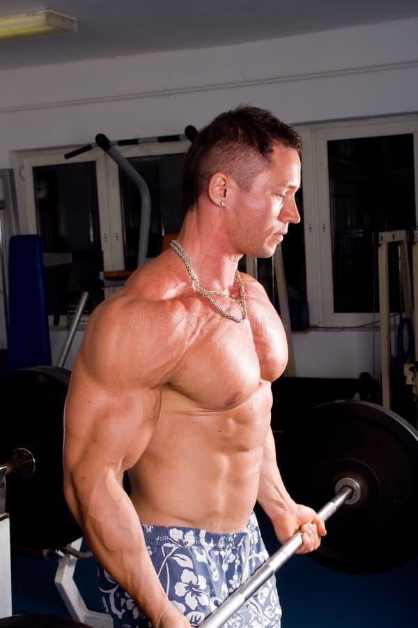 Treinamento do Bodybuilder fotografia de stock royalty free