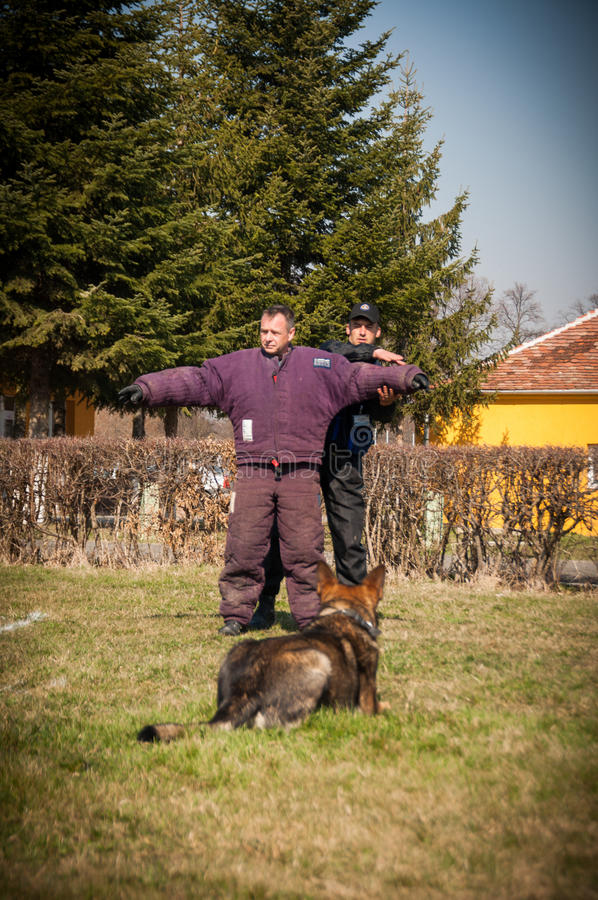 Treinamento do cão fotografia de stock royalty free