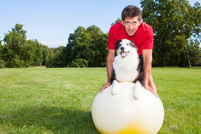 Treinamento do cão da bola da ioga fotos de stock