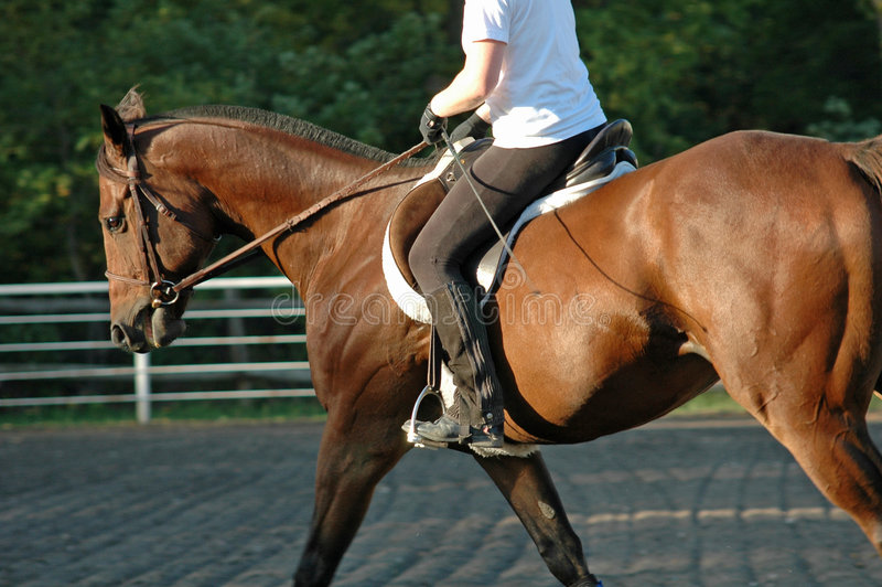 Treinamento do cavalo foto de stock royalty free