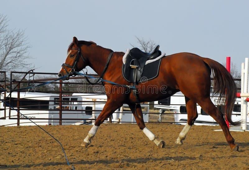 Treinamento do cavalo foto de stock