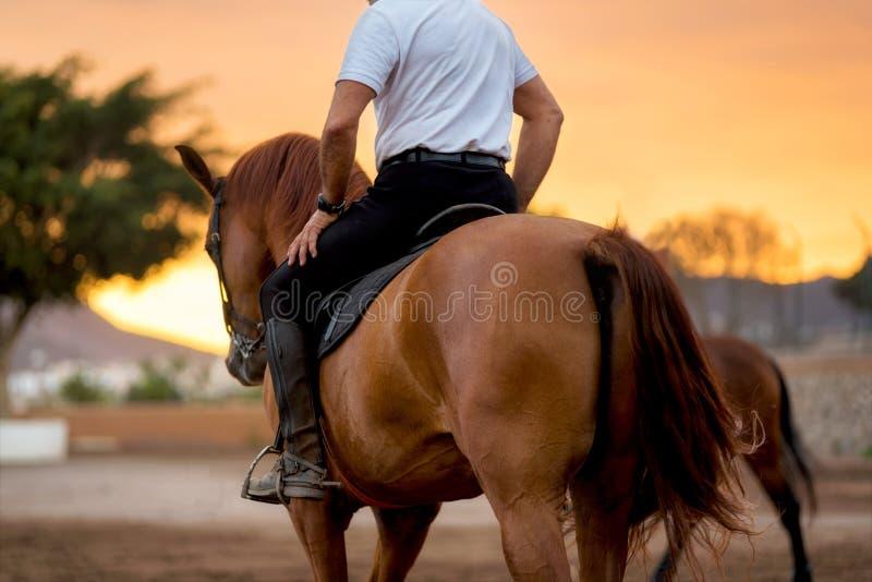 Treinamento do cavalo durante o por do sol cênico fotos de stock