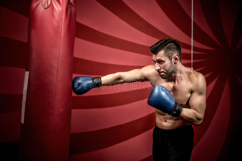 Treinamento do encaixotamento profissional com o homem atlético muscular Pugilista ativo no gym fotografia de stock