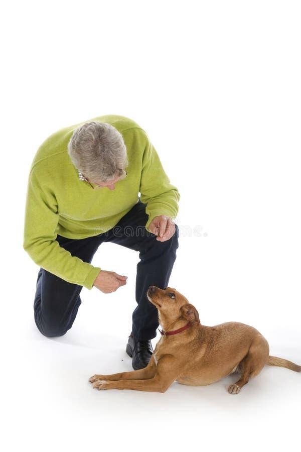 Treinando o cão fotos de stock