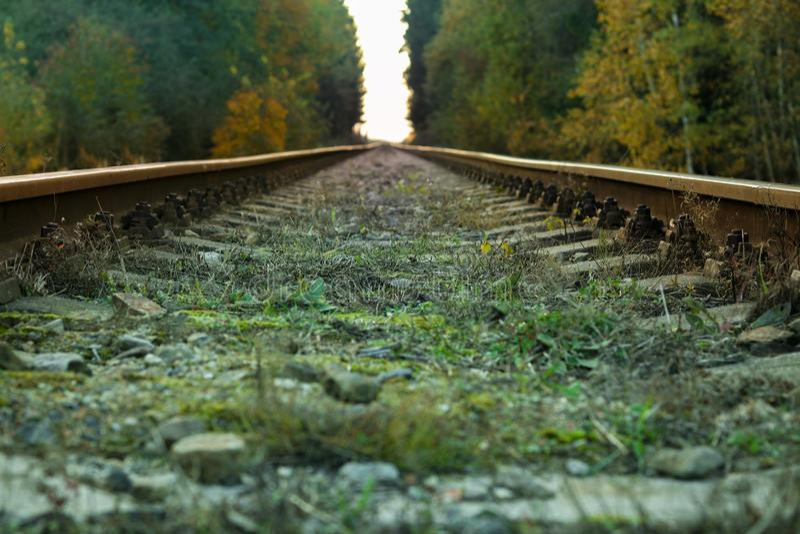 Treinlijn in het bos stock foto