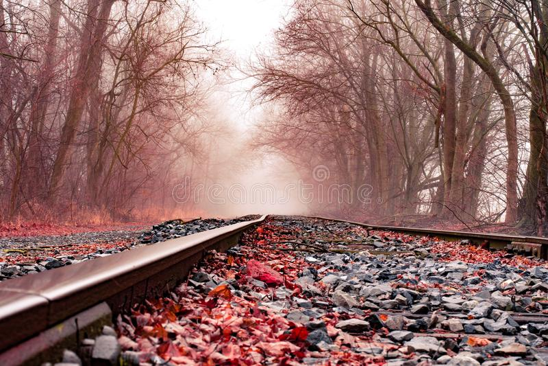 Treinsporen door rood gebladerte en bomen in de mist stock fotografie