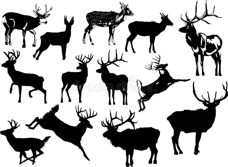 Treize silhouettes de cerfs communs illustration libre de droits