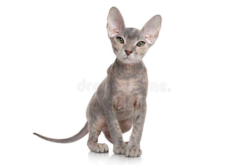 Trek sphynx katje op witte achtergrond aan stock foto's