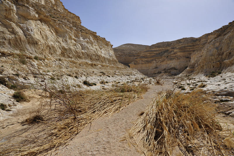 Trek van de Canion van de woestijn na vloed. royalty-vrije stock afbeelding