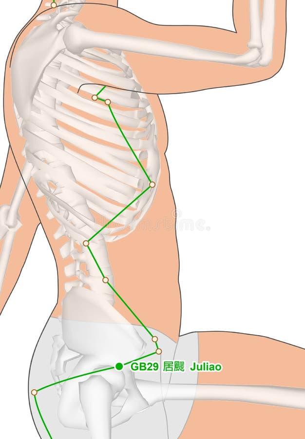Trekkend met Skelet, Acupunctuurpunt GB29 Juliao vector illustratie