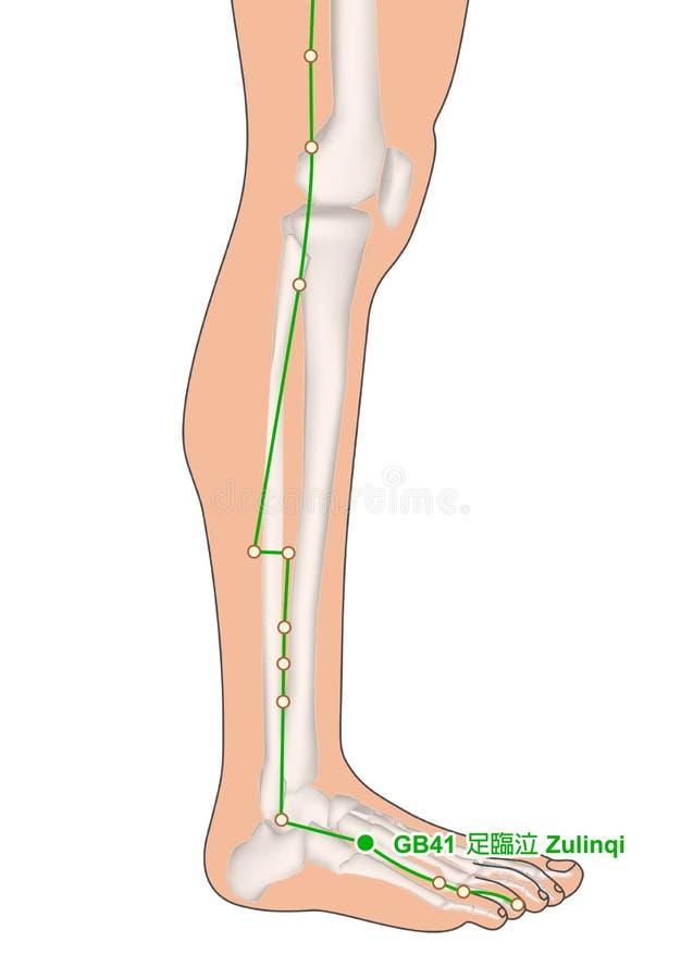 Trekkend met Skelet, Acupunctuurpunt GB41 Zulinqi stock illustratie