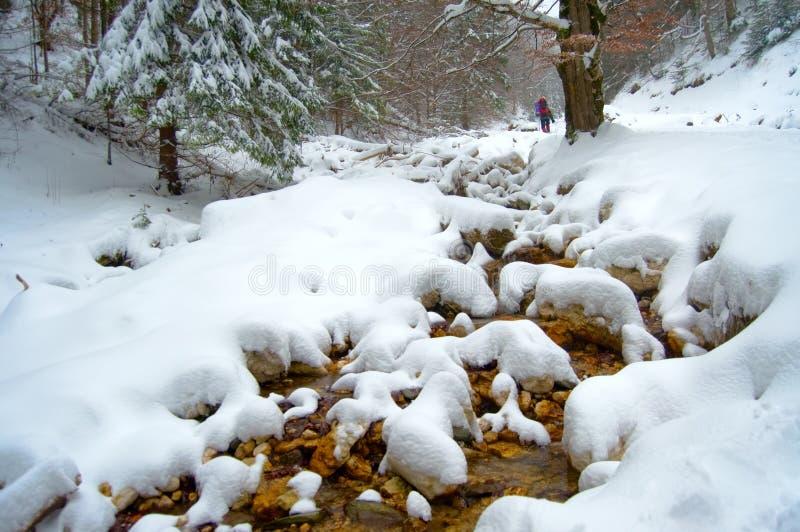 Trekker dans la neige photo libre de droits