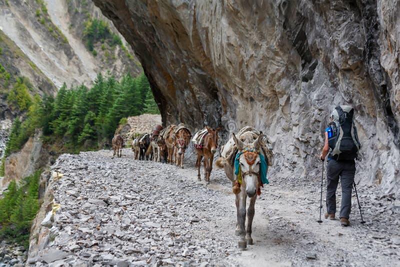 Trekker op Annapurna-kring in Nepal stock afbeelding