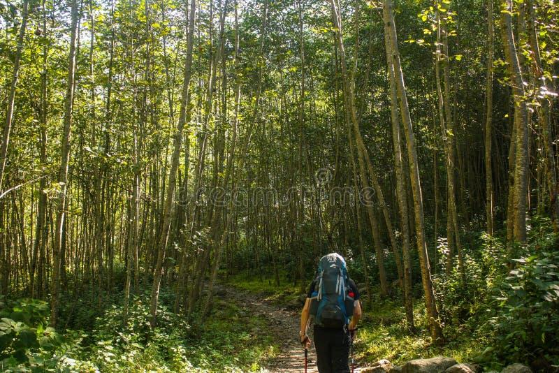 Trekker through woods in Langtang National Park royalty free stock images