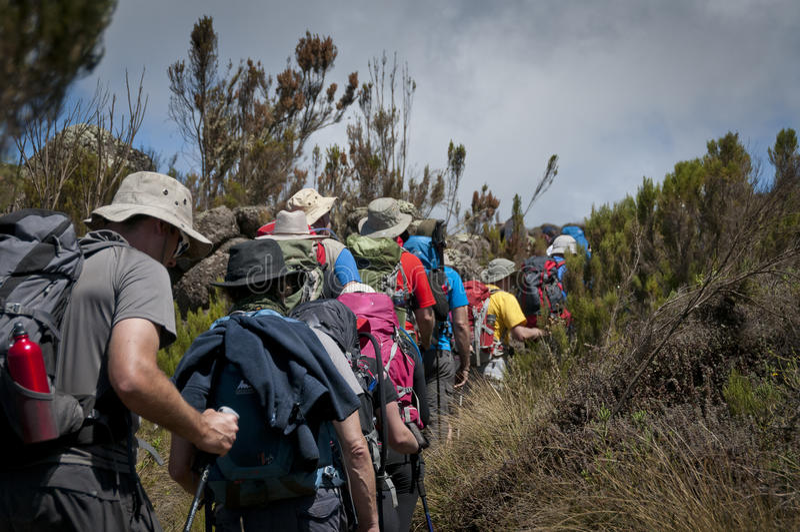 Trekkers, die durch Heidemoor auf Kilimanjaro überschreiten stockfotografie