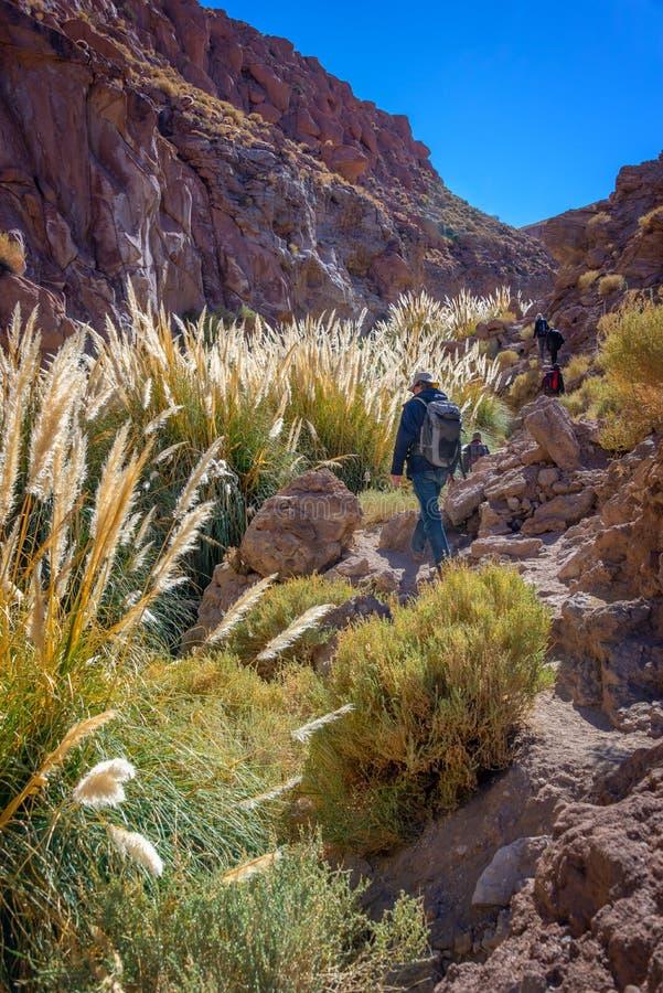 Trekkers, die entlang Puritama-Fluss, Atacama-Wüste Chile gehen stockbild