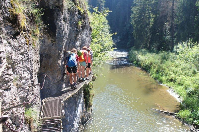 Trekkers en escalera del metal en el barranco Prielom Hornadu en parque nacional del paraíso eslovaco del raj del ½ de Slovenskà fotos de archivo libres de regalías