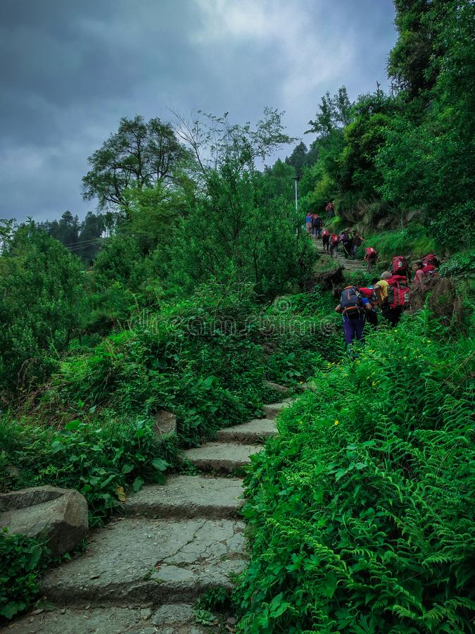 Trekkers loopt op de steenweg tussen de struiken royalty-vrije stock afbeeldingen